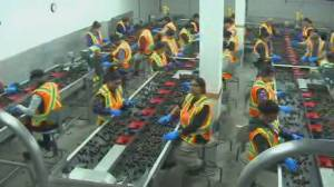 New measures for temporary foreign workers amid pandemic (02:26)
