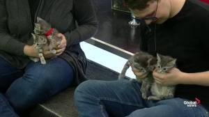 Adopt A Pet: 'Penguin' and Kitten Litter