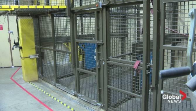 5 2m Upgrade At Calgary Zoo To Improve Animal Welfare