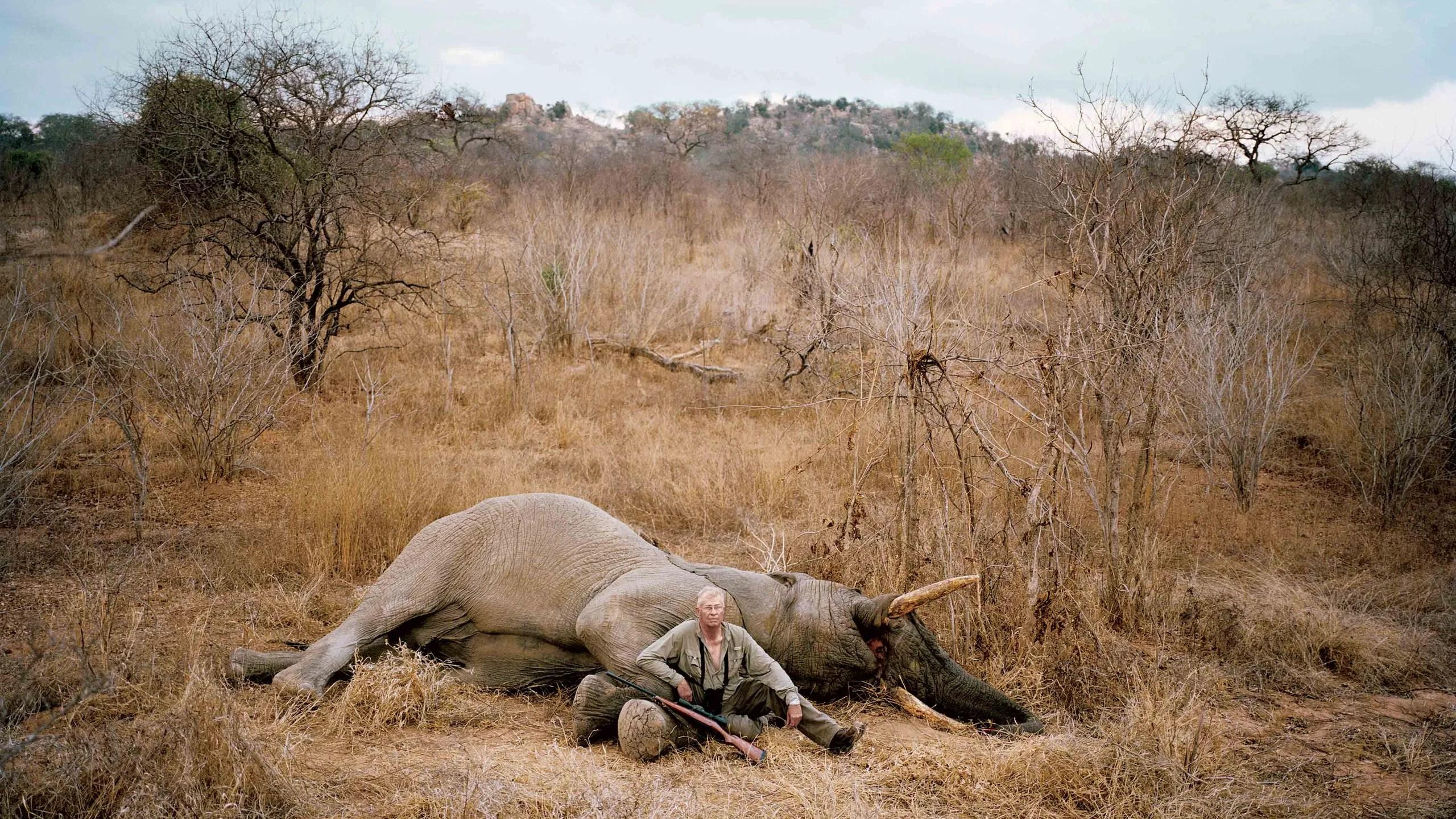Who Wants To Shoot An Elephant
