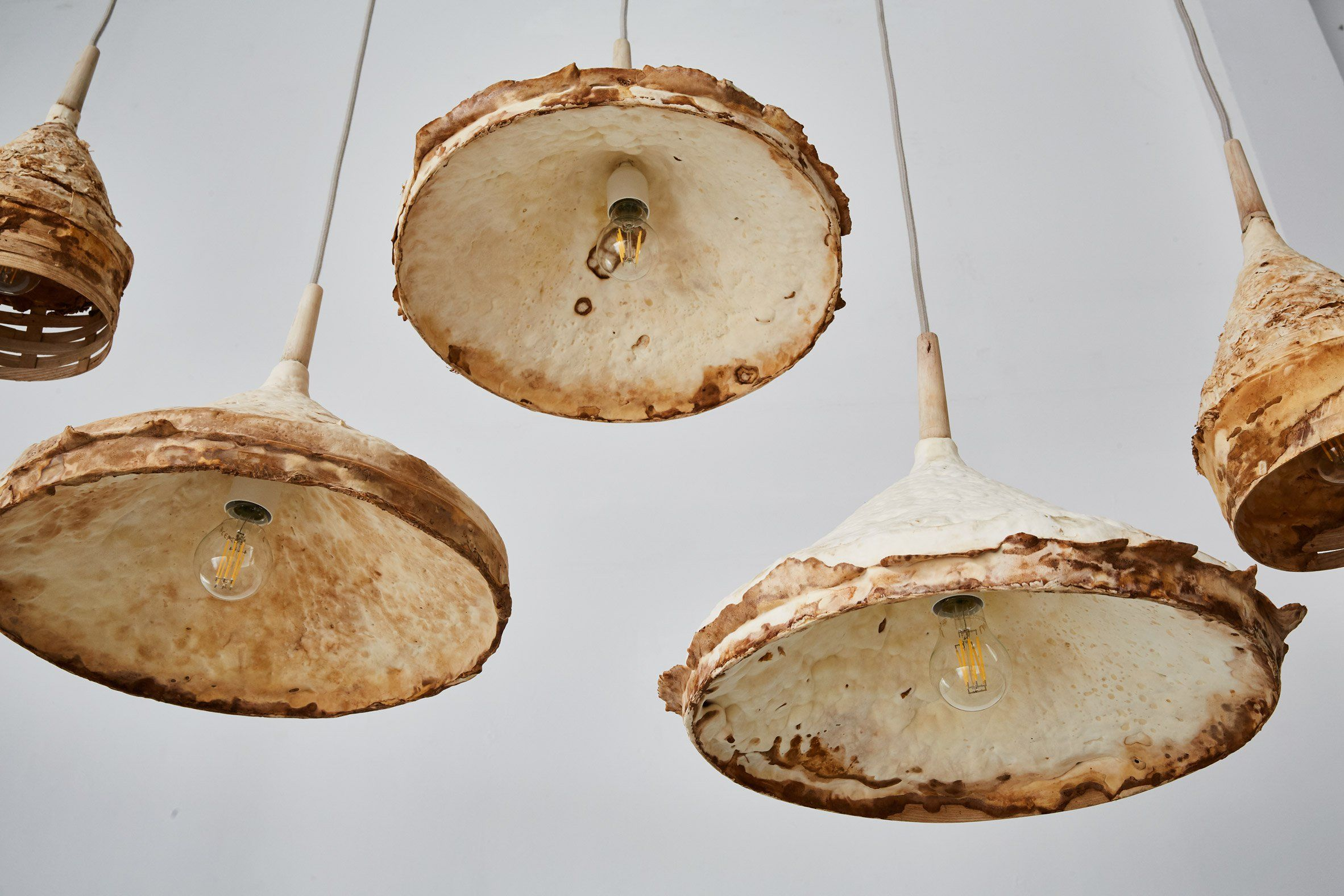 Why Designers Are Using Mushrooms To Create Eco Friendly Furniture