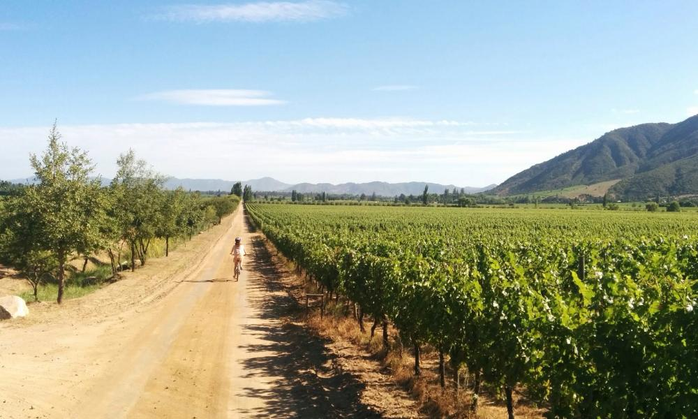 Cycling in the Colchagua valley.
