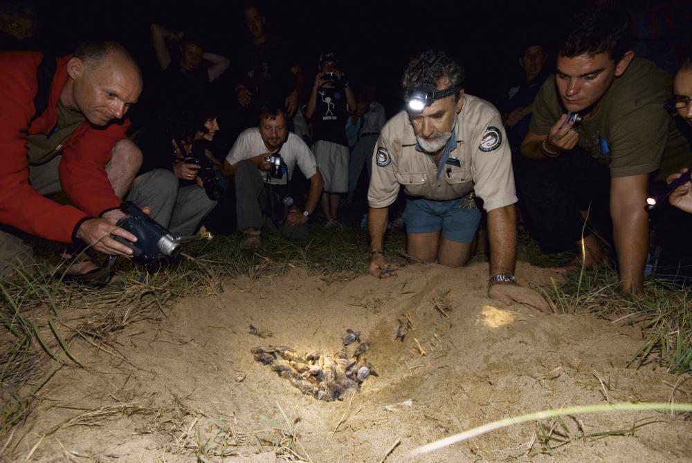 Loggerhead turtle nest and ranger