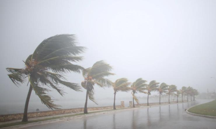 Palm trees sway in the wind prior to the arrival of the Hurricane Irma in Caibarien, Cuba, September 8, 2017. REUTERS/Alexandre Meneghini TPX IMAGES OF THE DAY