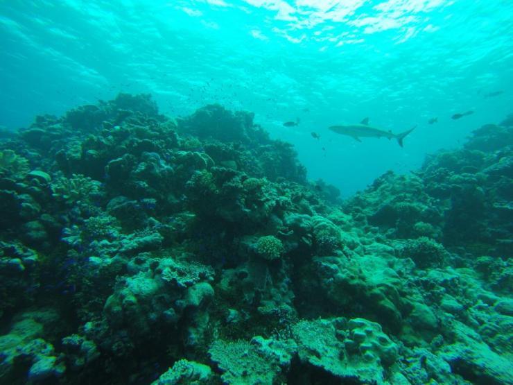 A shark in waters around Bikini Atoll.