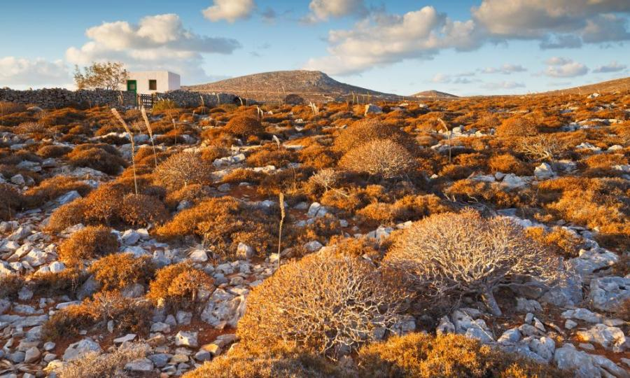 A rural landscape with interesting flora on Folegandros.