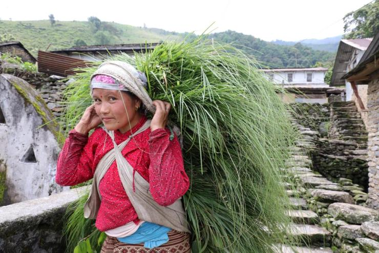 A woman carries a cargo of animal fodder, strap around her head.