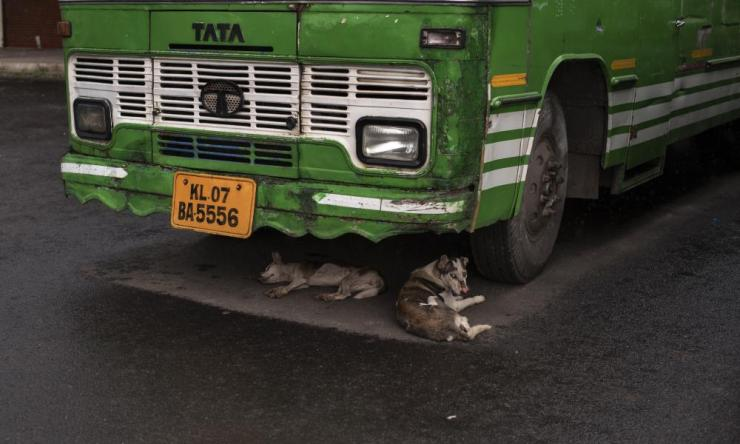 Stray dogs shelter from rain under a bus in Kochi, in the southern state of Kerala.