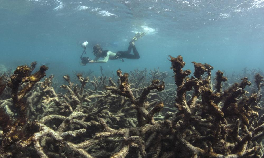 Aftermath of coral bleaching in the Great Barrier Reef