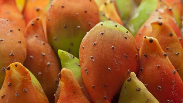 Oputia Ficus Indica