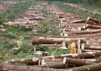 دامداری و نابودی جنگلها