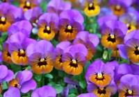 جعبهای «گل بنفشه» – داستان کوتاهی از فرزانه بابایی