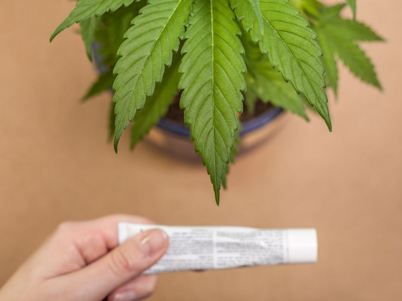 News Picture: Many Americans Eying CBD, Pot as Pain Relievers Without Knowing Risks