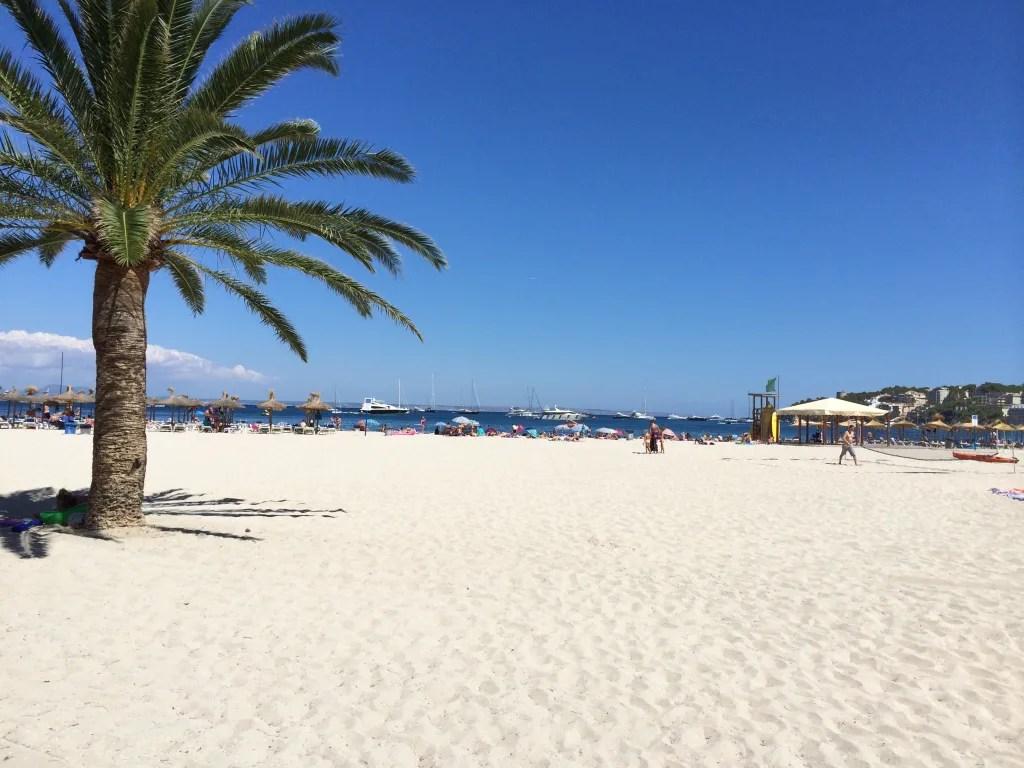palmanova beach zu strand palma nova