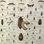 förskola skarpnäck insekter