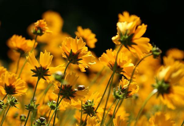 Flori in iunie