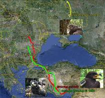 Harta de migratie acvile 2012