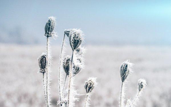 snow-cold-winter-flower-bokeh-nature-flare-imac-27