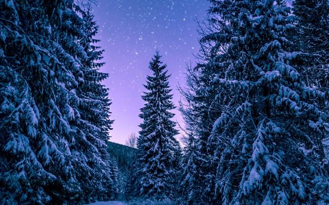 snow-winter-wood-tree-road-night-nature-imac-27