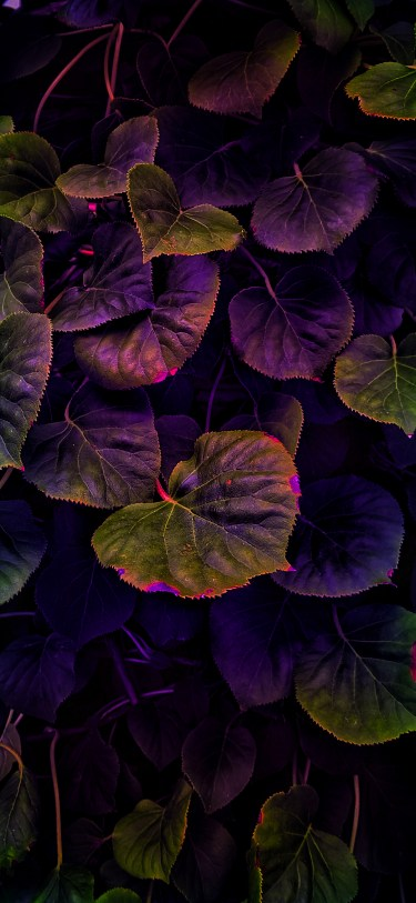 Nature photography iPhone wallpaper wallsbyjfl HDR purple