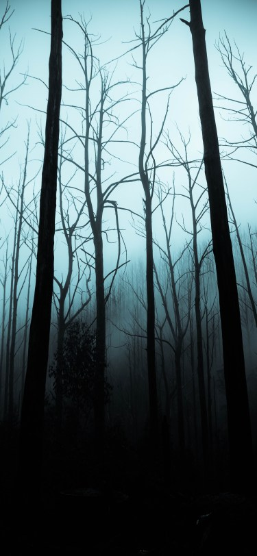 Halloween iphone wallpaper spooky woods idownloadblog jack cain