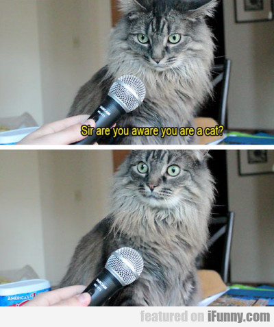 Sir Are You Aware You Are A Cat?