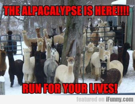 The Alpacalypse Is Here