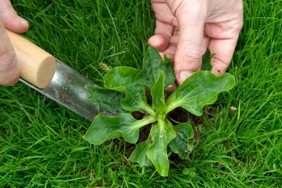 Should Leaves Be Removed Lawn