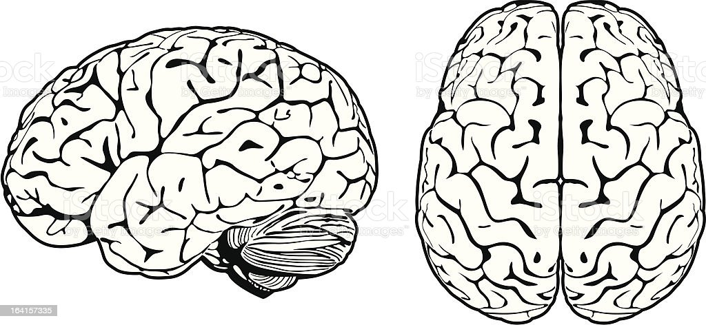 Royalty Free Top View Of Brain Clip Art, Vector Images