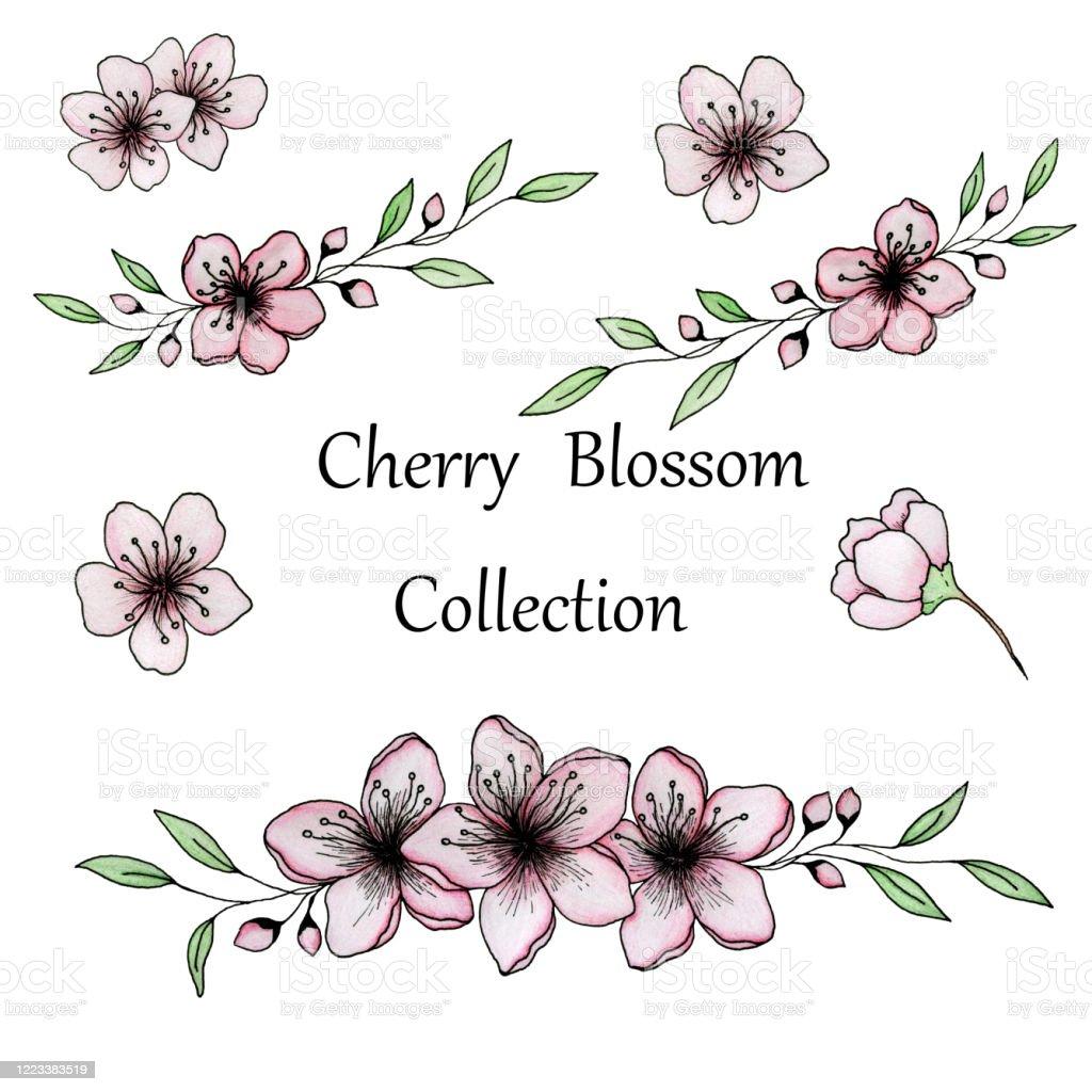 Illustration Florale Avec Sakura Ou Fleurs De Cerisier Dessin Dencre Et De Crayon De Fleurs De Cerisier En Fleur Collection Florale De Sakura Vecteurs Libres De Droits Et Plus D Images Vectorielles De