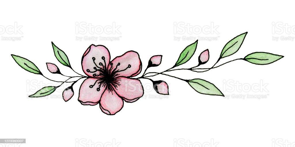 Dessin Dencre Et De Crayon De Sakura Ou Fleur De Fleur De Cerisier Isole Sur Lillustration Blanche Et Elegante De Fleur De Cerise Vecteurs Libres De Droits Et Plus D Images Vectorielles De
