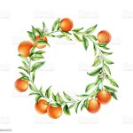 Orange Tree Branches Wreath Isolated Round Frame With Citrus Fruit Package Design Place For Text Stock Illustration Download Image Now Istock