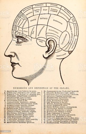 Vintage Phrenology Diagram Stock Vector Art & More Images