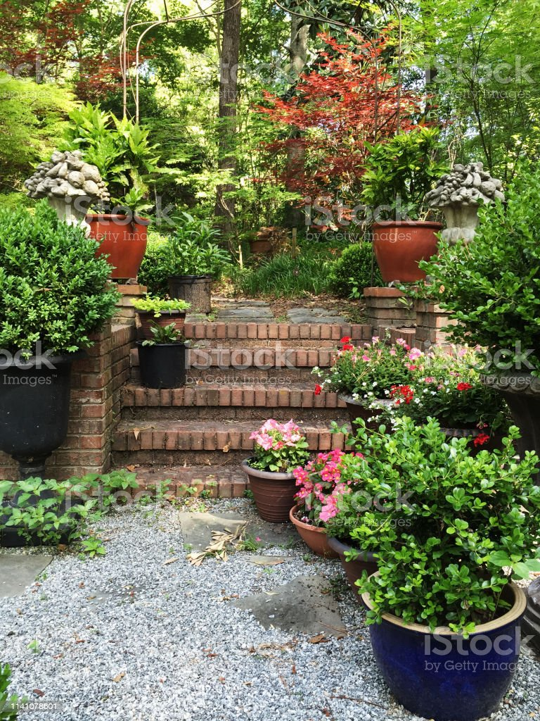 backyard patio container garden with plants and flowers stock photo download image now istock