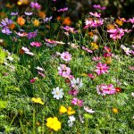 Beautiful Vintage Flower In The Garden Stock Photo Download Image Now Istock