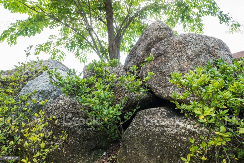 https www istockphoto com fr photo closeup groupe de gros rocher pour d c3 a9corer avec des plantes vertes dans le fond du gm929361122 254854424