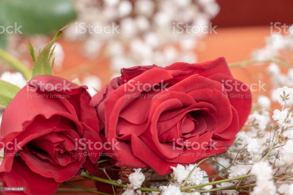 https www istockphoto com photo deux roses rouges et fleurs blanches de gypsophile pour la saint valentin et gm1094904698 293880170