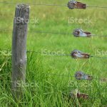 Electric Cattle Fence Stock Photo Download Image Now Istock