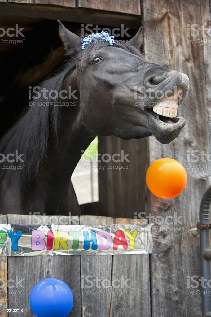 2 498 Happy Birthday Horse Stock Photos Pictures Royalty Free Images Istock