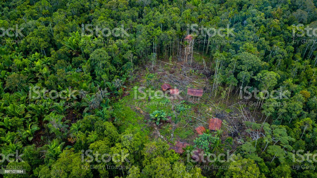 Korowai Tree Houses In A Jungle Clearing Westpapua Indonesia Stock Photo Download Image Now Istock