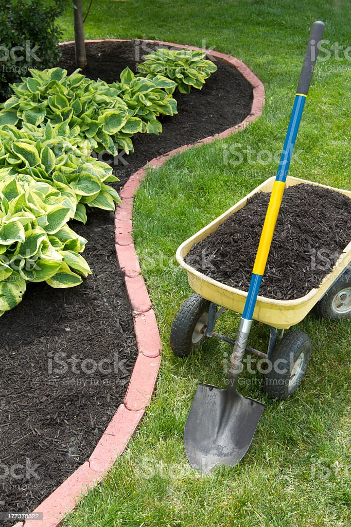 Mulch Bed With Edging Stock Photo Download Image Now Istock