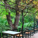 Outdoor Cafe In The National Garden In Athens Greece Stock Photo Download Image Now Istock