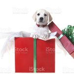 Puppy In A Christmas Box Stock Photo Download Image Now Istock