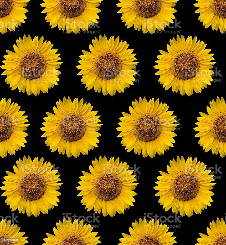 Sunflower Wallpaper Stock Photo Download Image Now Istock
