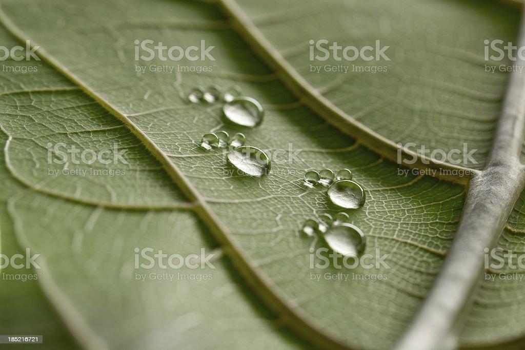 https www istockphoto com fr photo petite goutte deau sur feuille footprints gm185216721 19638862