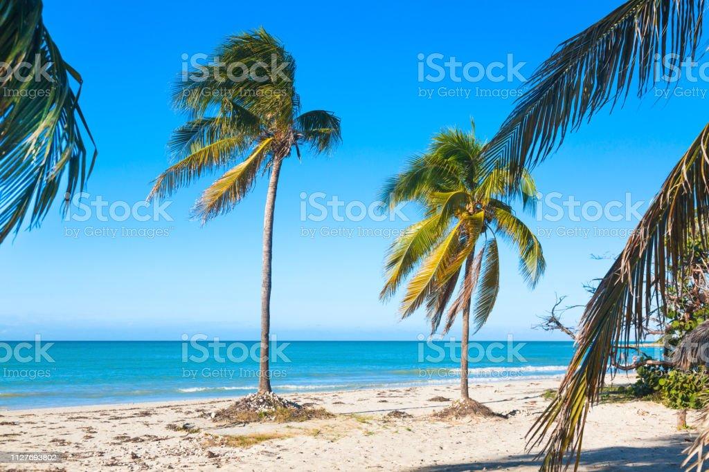 photo libre de droit de vacances vacances fond decran palmiers et plage tropicale a varadero cuba banque d images et plus d images libres de droit de abstrait istock