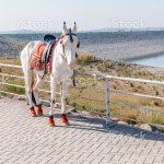 White Horse Stock Photo Download Image Now Istock