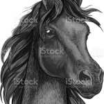 Black Horse Portrait With Shiny Dark Eyes Stock Illustration Download Image Now Istock