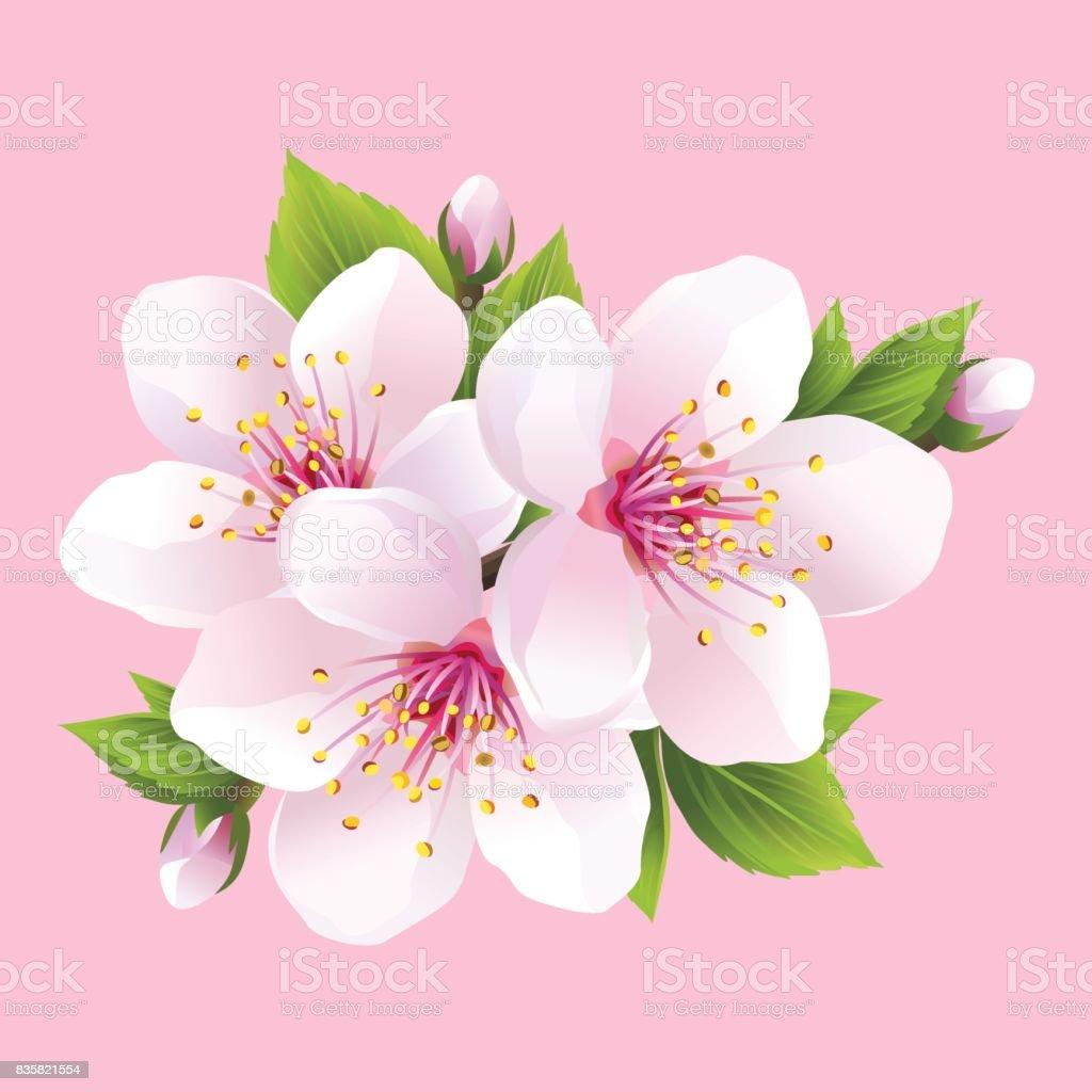 Branche De Sakura Fleur Blanche Cerisier Japonais Vecteurs Libres De Droits Et Plus D Images Vectorielles De Arbre Istock