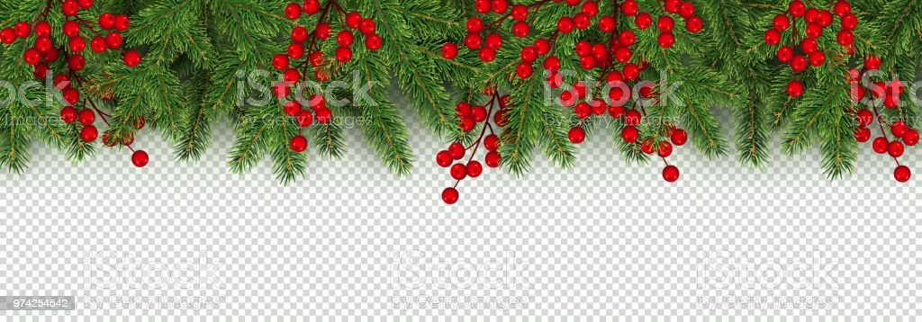 Christmas And New Year Border Of Realistic Branches Of Christmas     Christmas and New Year border of realistic branches of Christmas tree and  holly berries royalty